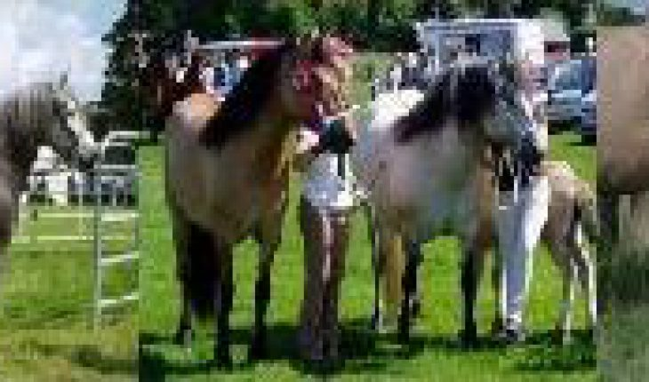 Pony Trekking and Hacking Clubs, Society, groups, activities, TREKKING & RIDING CENTRE In Caithness, Highland, Scotland