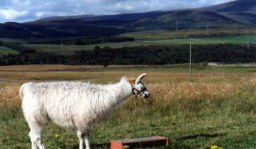 llama hills
