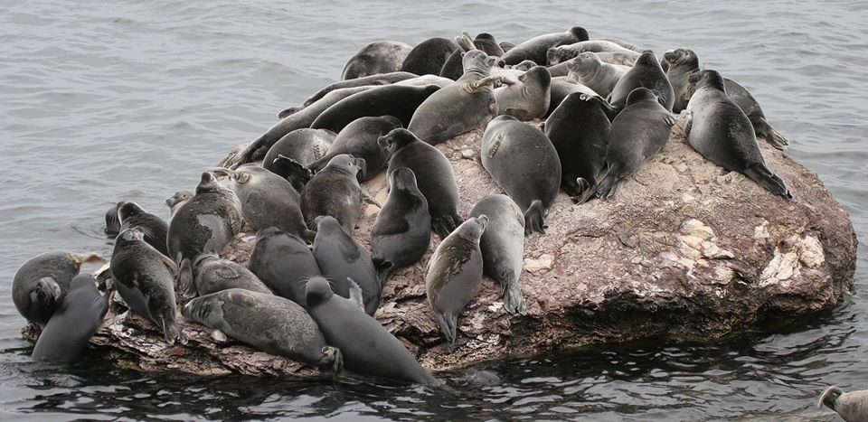 About Seals