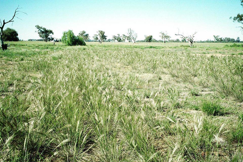 Lowland grasslands