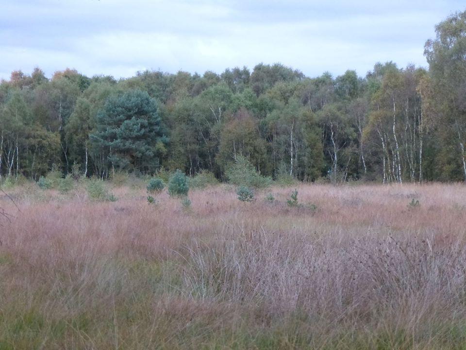 Lowland heathland