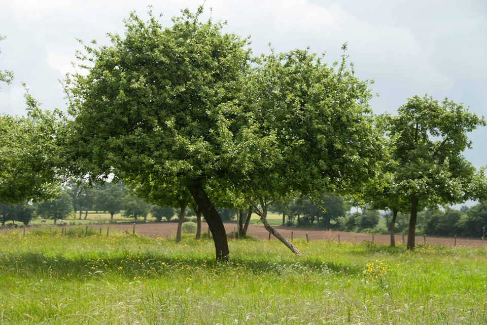 Traditional orchards
